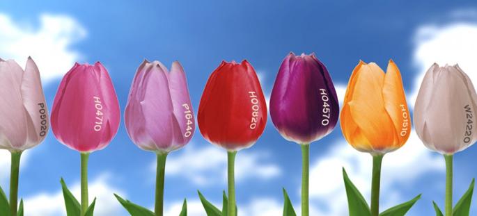 160301 Tulpenkleuren